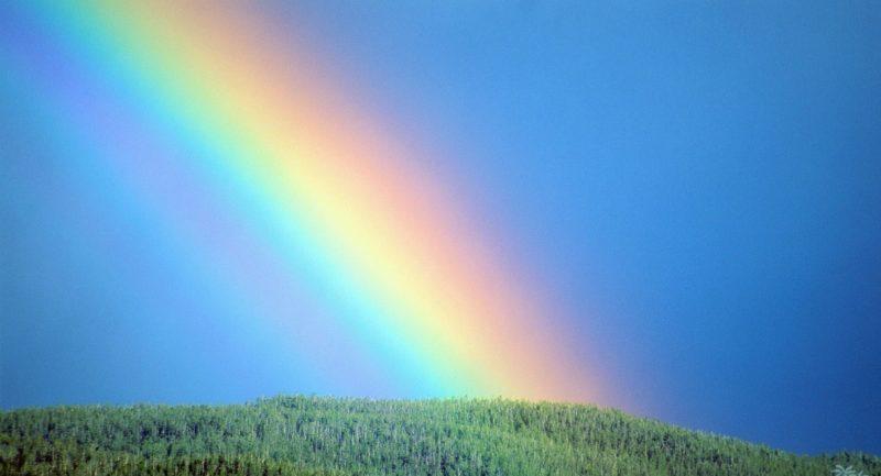 regenboog liefde plot