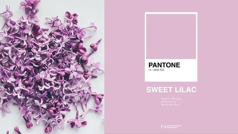 Kleur Sweet Lilac