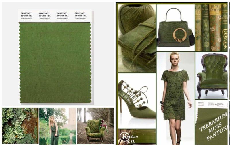 Kleur Terrarium Moss