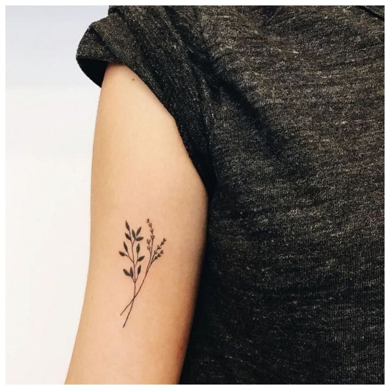 Derinant kontūro tatuiruotę su plunksna