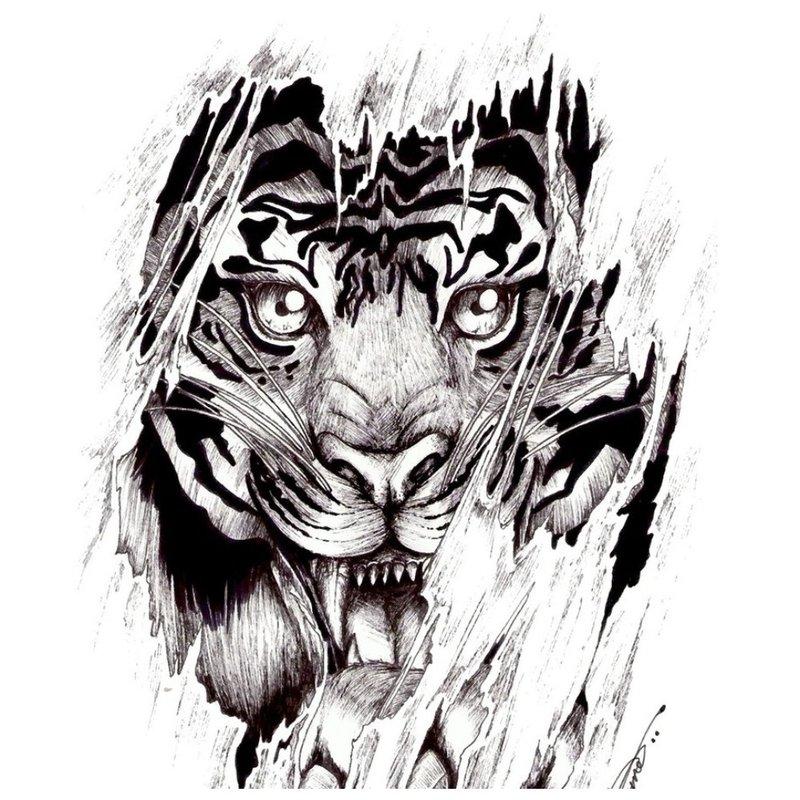 Tigro tatuiruotės eskizas
