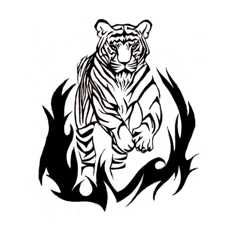 Eskizas su tigru ant ugnies
