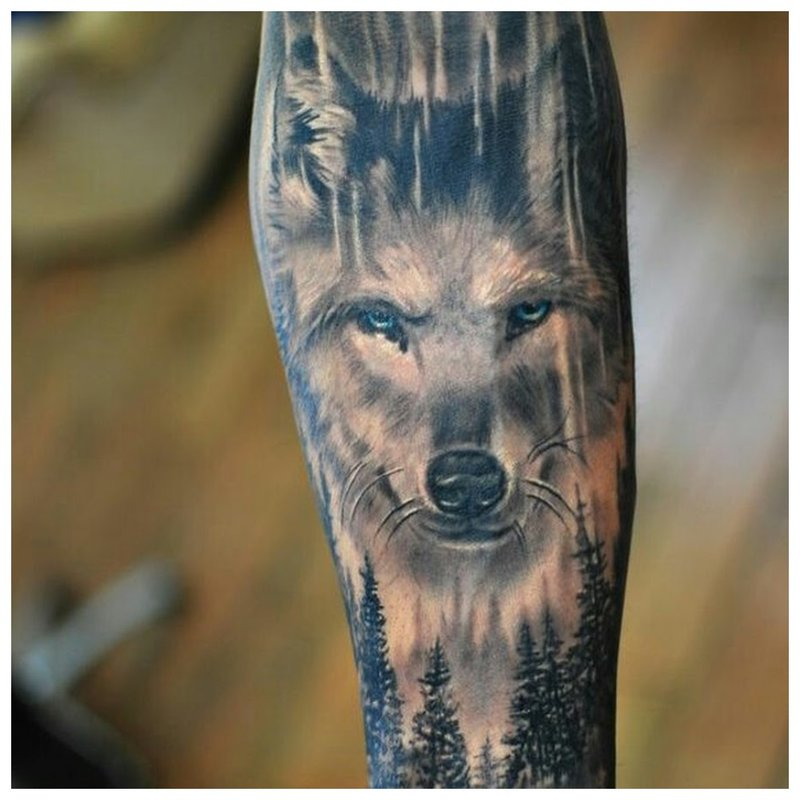 De strenge blik van een wolf - een tatoeage op de arm van een man