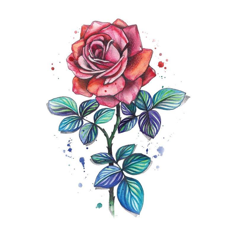 Spalvos eskizas raudona rožė