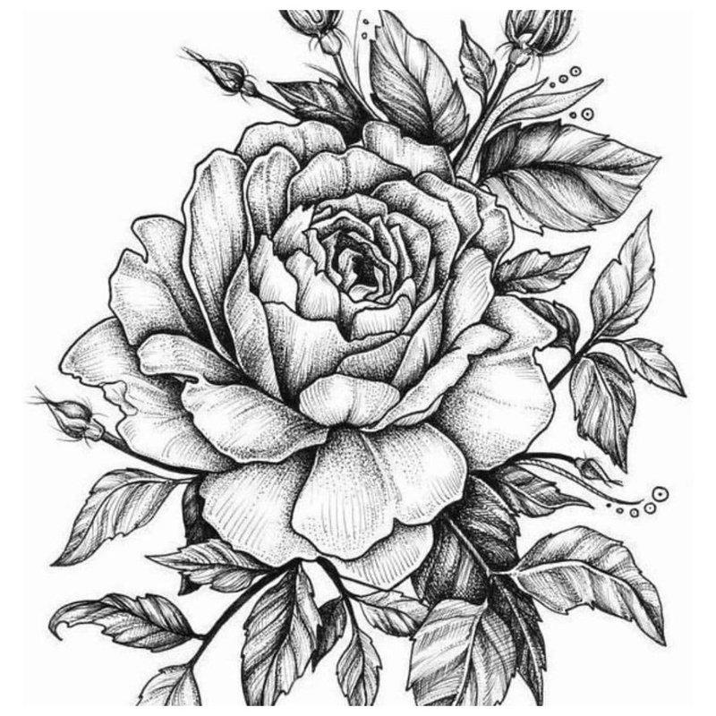 Rožė - tatuiruotės eskizas