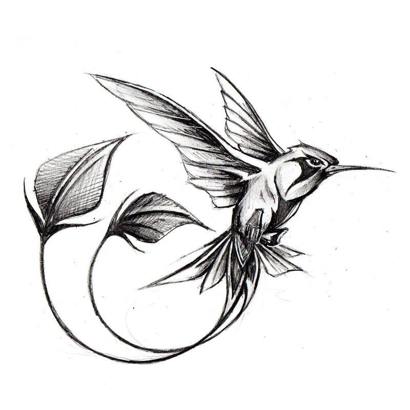 Kolibrio eskizas
