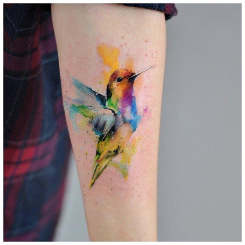Kolumbo akvarelės tatuiruotė